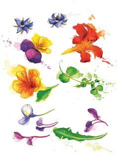 Flowers & Plants - Georgina Luck