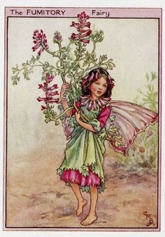 FLOWER FAIRIES/BOTANICALS: The Fumitory Fairy; This is an original vintage Cicely Mary Barker Flower fairies colour print. It is not a modern reproduction, approximate size x x 3 inches Cicely Mary Barker, Fantasy Kunst, Fantasy Art, Flower Fairies Books, Fairy Pictures, Vintage Fairies, Beautiful Fairies, Fantasy Illustration, Fairy Art