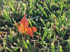 Change #autumn