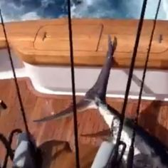 In footage that might disturb some viewers, a fisherman on a boat off the shore of the Dominican Republic is nearly impaled by a 350-pound blue marlin when it dramatically leaps on board. While the angler lived to tell the tale of his near miss, the impressive marlin sadly didn't fare as well.