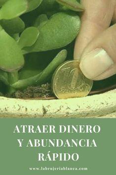 9 Ideas De Plantas Para Atraer Dinero Rituales Para La Suerte Plantas Para Atraer Dinero Ruda Para La Suerte