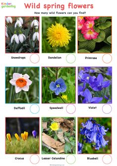 Spring wild flowers activity sheet for kids.  Download and print our Spring wildflower spotter checklist and see how many you can find. This easy and fun nature inspired activity is fun for all ages.