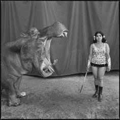 Mary Ellen Mark, Hippopotamus and Performer. Great Rayman Circus, Madras, India, 1989