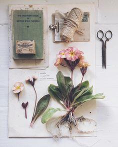 Permillion44 @instagram #curated_nature