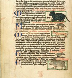 Miniatures of a weasel and other animals, including a cat and a hedgehog: England, middle of the 13th century (London, British Library, MS. Harley 3244, f. 49v).