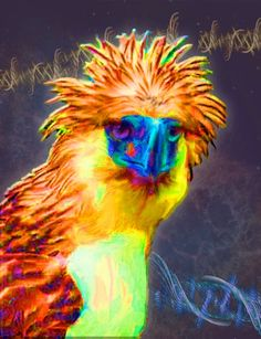 """Philippine Eagle  Contact: Marv Lyons - 619.691.8776  lyons@visionsynthesis.net  Contact: Marv Lyons - 619.691.8776  13"""" x 19"""" print on fine watercolor paper or canvas $495 • Shipping Extra"""