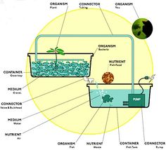 Aquaponics to grow greens and tilapia harmoniously.