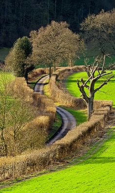 The winding country lane, Oxfordshire, England    The hedgerows make it difficult at cross streets to see traffic