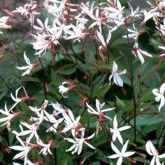 Geranium Macrorrhizum, Fleur Orange, Gardening Tips, In The Heights, Nature, Outdoor, Extensions, Garden Ideas, Cottage
