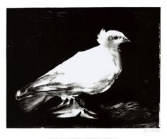La petite colombe, the little dove by Picasso.