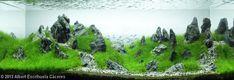 2013 AGA Aquascaping Contest - Entry #139