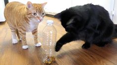 Five tricks for cat owners to keep pets happy