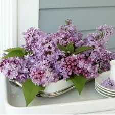Lilacs-memories with Grandma L