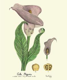 Fran Méndez - diseño e ilustración | Alma Botánica