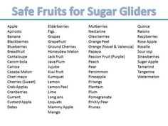 A Recommended Sugar Glider Diet Consists Of Three Parts  E2 80 A2 A Serving Of Fruits  E2 80 A2
