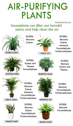 Home Purifying By This Plants Homeremedy Remedy