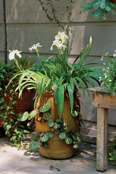 Plant an attention grabber with a creative combination. This tall jar showcases Japanese roof irises and creeping strawberry begonias.