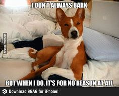 This is my dog. He barks at the wind and makes me have bad thoughts, lol.
