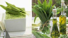 Kde najít medvědí česnek a jak ho rozeznat od jedovaté konvalinky? Celery, Detox, Glass Vase, Food And Drink, Herbs, Fresh, Vegetables, Plants, Herb