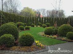 Ogród mały, ale pojemny;) - strona 160 - Forum ogrodnicze - Ogrodowisko