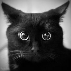 Black by =Lorem1psum. I am not evil. I just want fish. The cat says.  The Incensewoman