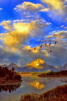 'Taking Flight' Canada Geese, Mount Moran reflected in the Oxbow Bend of the Snake River, Grand Teton National Park, Wyoming Beautiful World, Beautiful Places, Beautiful Pictures, Beautiful Sky, Beautiful Scenery, Beautiful Sites, Stunningly Beautiful, Amazing Places, Grand Teton National Park