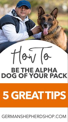 Excellent Photos How To Be the Alpha Dog Of Your Pack Dogs. Ideas How Are Pets Given Basic Obedience Training ? It has probably the most fundamental orders you'll Red German Shepherd, German Shepherd Training, German Shepherd Pictures, German Shepherd Puppies, German Shepherd Information, German Shorthaired Pointer, Service Dogs, Dog Mom, Dog Stuff