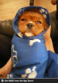 """She likes to sleep as a burrito""  Finally! I'm not the only one who does this to their dog!"