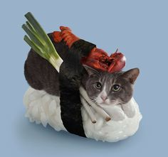 Bizarre But Adorable Pictures Of Cats Dressed To Look Like Sushi; cat with a lobster on its back?