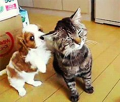 gif kitty cat dog animals cute adorable fluffy puppy aw cats baby animals kitten season every tag in the world