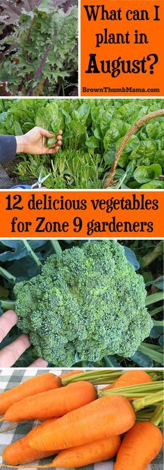 Plant these 12 vegetables in August for a tasty harvest this fall. Includes recommended varieties and growing tips. (Zone 9)