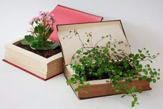 Green Wedding--book centerpieces in that a green in more ways than one--plants are great for the earth and the books can be recycled