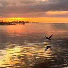 """""""Sometimes you will never know the value of a moment, until it becomes a memory."""" - Dr. Seuss 📷: Gail Cothran    #DrSeuss #Moment #Memory #unset #StGeorgeIslandFL #RVPSGI  #Apalachicola #Travel #VisitFL #SGI #GulfofMexico #stgeorgeisland #familytravel #beach #beachlife #gulfcoast #lovefl #saltlife #coastal #beachdreams #islandlife #oysters #beachlover #Beautiful #forgottenCoast    #Regram via @B58aWfHAwUm Vacation Resorts, Gulf Of Mexico, Island Life, Oysters, Family Travel, Coastal, Sunrise, In This Moment, Photo And Video"""