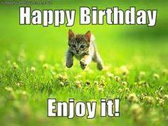 cat memes - Bing Images