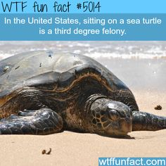 Don't sit on a sea turtle - WTF fun facts