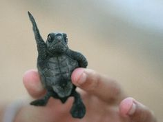 turtles that stay small forever - Google Search