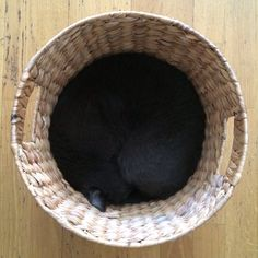 Cats and baskets...
