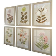 Maison Maison - Herbiers/Botanicals/Pressed Flowers - 1stdibs ❤ liked on Polyvore featuring home, home decor, wall art, art, pictures, quadros, art work, borders and picture frame