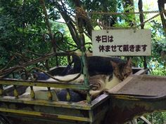 京都にある観光スポット「哲学の道」って知っていますか?一風変わった名前のこの道は、観光客に人気の一本道として知られています。しかしこの道の至るところにたくさんの猫がいるということを知っていましたか?「哲学の道」は知られざる猫天国だったんです!
