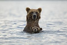 Swimming lesson Photograph by Marco Mattiussi -- National Geographic Your Shot