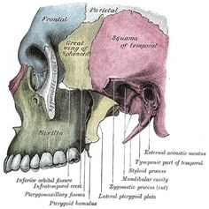 The infratemporal fossa is an irregularly shaped cavity, situated below and medial to the zygomatic arch.