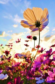 * Sunlit beauty *