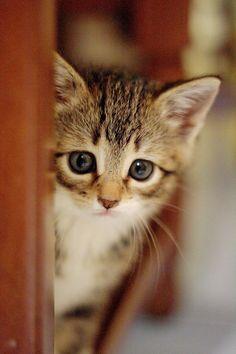 Look How Cute Kittens Little Kittens, Cute Cats And Kittens, Baby Cats, Kittens Cutest, Baby Animals, Funny Animals, Cute Animals, Tiny Kitten, Pretty Cats