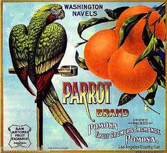 Pomona Parrot Bird #3 Orange Citrus Fruit Crate Label Art Print Fine Art Prints, Canvas Prints, Framed Prints, Label Art, Seed Packaging, Parrot Bird, Vintage Labels, Vintage Advertisements, Poster Size Prints