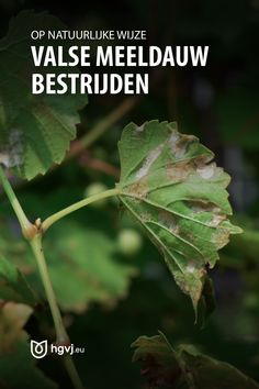 Garden Pests, Vegetable Garden, Plant Leaves, Veggies, Home And Garden, Plants, Life, Lawn, Vegetable Recipes