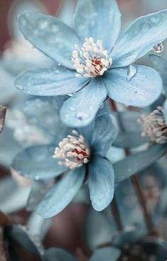 All next to you – Floral Garden Ideas – Best Home Plants Blue Floral Wallpaper, Flower Wallpaper, Floral Wallpapers, Nature Wallpaper, Spring Wallpaper, Grey Wallpaper, Wallpaper Backgrounds, Amazing Flowers, Pretty Flowers