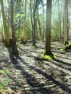 Reydon Wood, nr Southwold - making a path through the woods