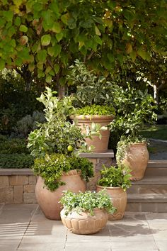 this grouping of plants in pots looks especially graceful - - - potterybarn:  Garden essentials