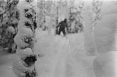 A new cryptozoology investigation, Russian Yeti: The Killer Lives, aired last night. They hint that a monster Yeti, Bigfoot's cousin, may be responsible. The. Mysterious Places On Earth, Mysterious Universe, Bigfoot Photos, Finding Bigfoot, Bigfoot Sasquatch, David Attenborough, Mothman, What Really Happened, Discovery Channel