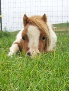 Just the cuteness. thanks to Leigh Grundy board Horseys which is what I still call them too.